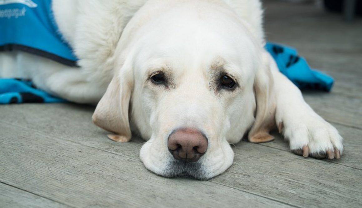 dog-3175810_640