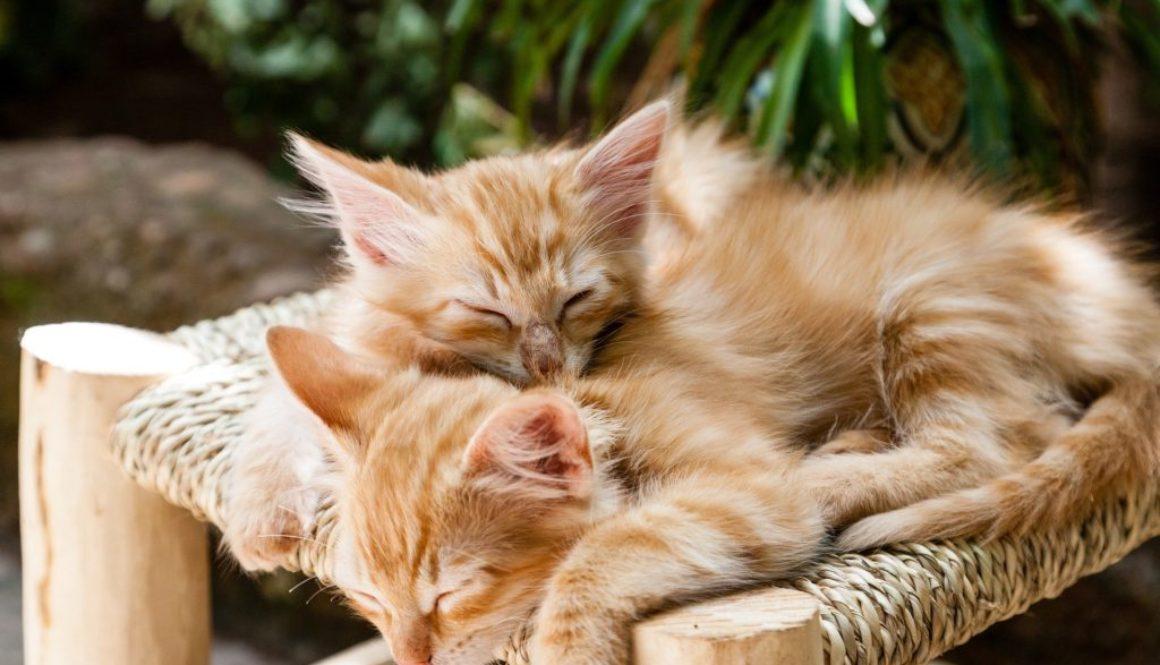 kittens-1916542_1920
