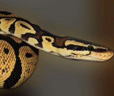 snake-419043_640