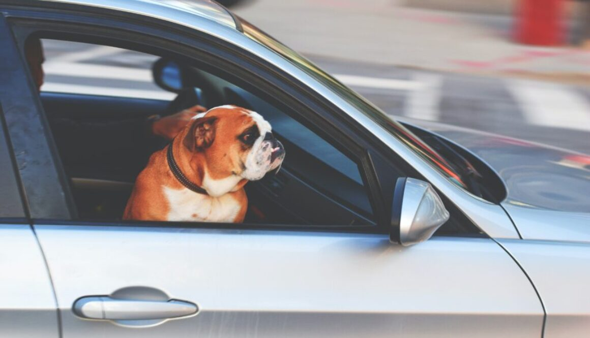 keep your pet safe when travelling by car